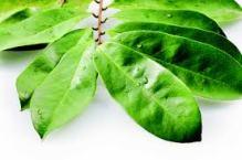 Obat Buang Air Besar Berdarah Herbal Tanpa Efek Samping ...